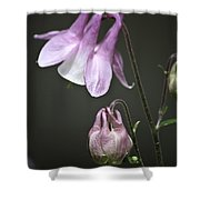 Lilac Columbine 3 Shower Curtain