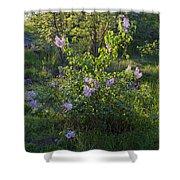 Lilac In Sunshine Shower Curtain