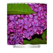 Lilac In The Dark Shower Curtain