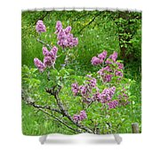 Lilac In The Spring Meadow Shower Curtain