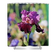 Lilac Iris In Bloom Shower Curtain