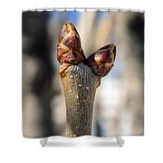 Lilac Leaf Buds Shower Curtain