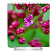 Lilac Opening Shower Curtain