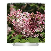 Lilac Pink Shower Curtain