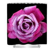 Lilac Rose Shower Curtain