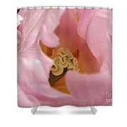 Lilac Charm Shower Curtain