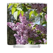 Lilacs 5545 Shower Curtain