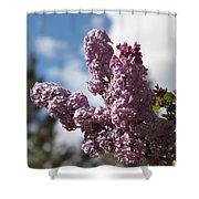 Lilacs 5547 Shower Curtain