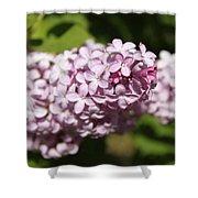 Lilacs 5549 Shower Curtain