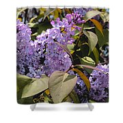 Lilacs II Shower Curtain