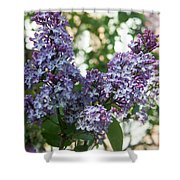 Lilacs In Spring Shower Curtain