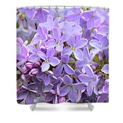 Lilacs-lavender Lovely  Shower Curtain