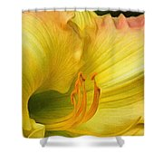 Lilied Curves Shower Curtain