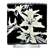 Lilies All Aglow Shower Curtain
