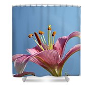 Lilies Art Prints Pink Lily Flower Giclee Art Prints Baslee Troutman Shower Curtain