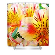 Lilies Art Prints Pink Yellow Lily Flowers 1 Giclee Prints Baslee Troutman Shower Curtain