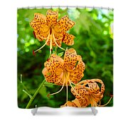 Lilies Art Tiger Lily Flowers Canvas Prints Floral Baslee Troutman Shower Curtain