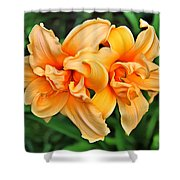 Lilies Collection - 1 Shower Curtain