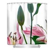 Pink Oriental Starfire Lilies Shower Curtain