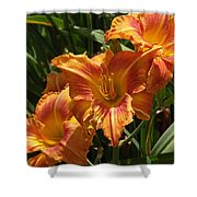 Lily Trio Shower Curtain