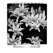 Lilies In My Garden Shower Curtain
