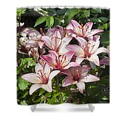 Lilies In Pink Shower Curtain
