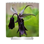 Lilies Of Brown Shower Curtain