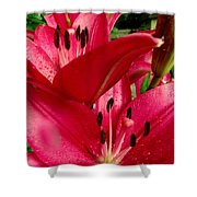Lilies Of The Oaks Shower Curtain