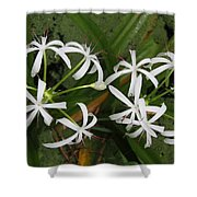 Lilies Of The Swamp Shower Curtain