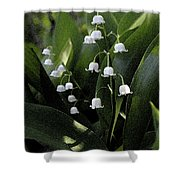 Lilies Of The Valley - Watercolor Shower Curtain