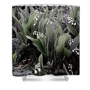 Lilies Of The Valley Mindscape No 2 Shower Curtain