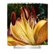 Lilies Orange Glowing Lily Flowers Giclee Prints Baslee Troutman Shower Curtain