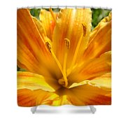 Lilies Orange Yellow Lily Flower 1 Giclee Art Prints Baslee Troutman Shower Curtain