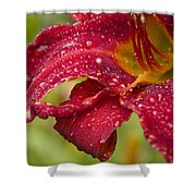 Lilly After Rain Shower Curtain