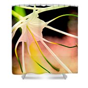 Lilly Flower Pastel Shower Curtain