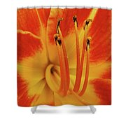 Lilly Macro Shower Curtain