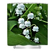 Lilly Of The Valley Flowers Shower Curtain by Jeremy Hayden