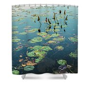 Lilly Pad In Pond  Shower Curtain