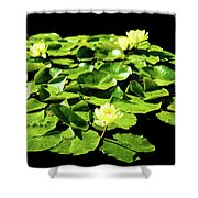 Lilly Pad Shower Curtain