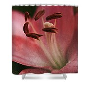 Lilly Pink Craquelure Shower Curtain