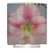 Lilly Soft Shower Curtain