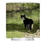 Lilly Shower Curtain by Trish Tritz