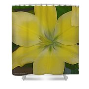 Lilly With Artistic Beauty Shower Curtain