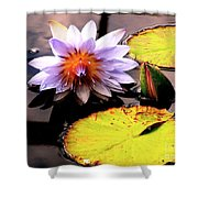 Lillypad In Bloom Shower Curtain