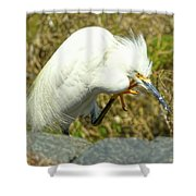 Lillywhite Shower Curtain