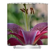 Lily 4 Shower Curtain