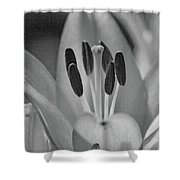 Lily - American Cheerleader 11 - Bw - Water Paper Shower Curtain