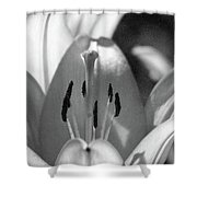 Lily - American Cheerleader 18 - Bw - Water Paper Shower Curtain