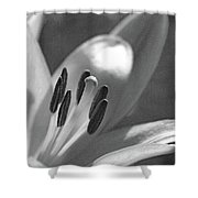 Lily - American Cheerleader 24 - Bw - Water Paper Shower Curtain