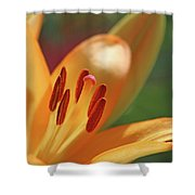 Lily - American Cheerleader 26 Shower Curtain